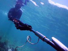 Подводная охота для начинающих