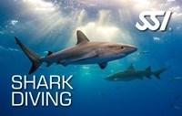 Курс погружения с акулами